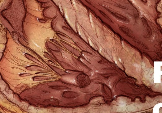 Here, the watercolor background layer is on. You can see the the off-white lines in the muscle creases