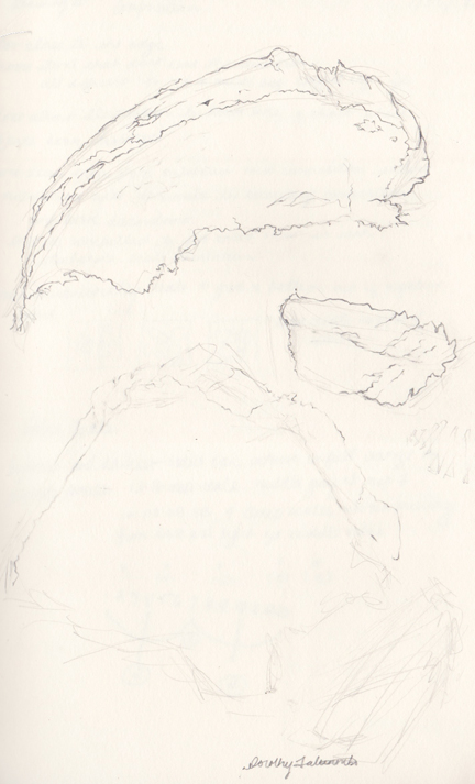 Contour Line Drawing Of Natural Forms : Contour line drawing of organic forms dorothy fatunmbi