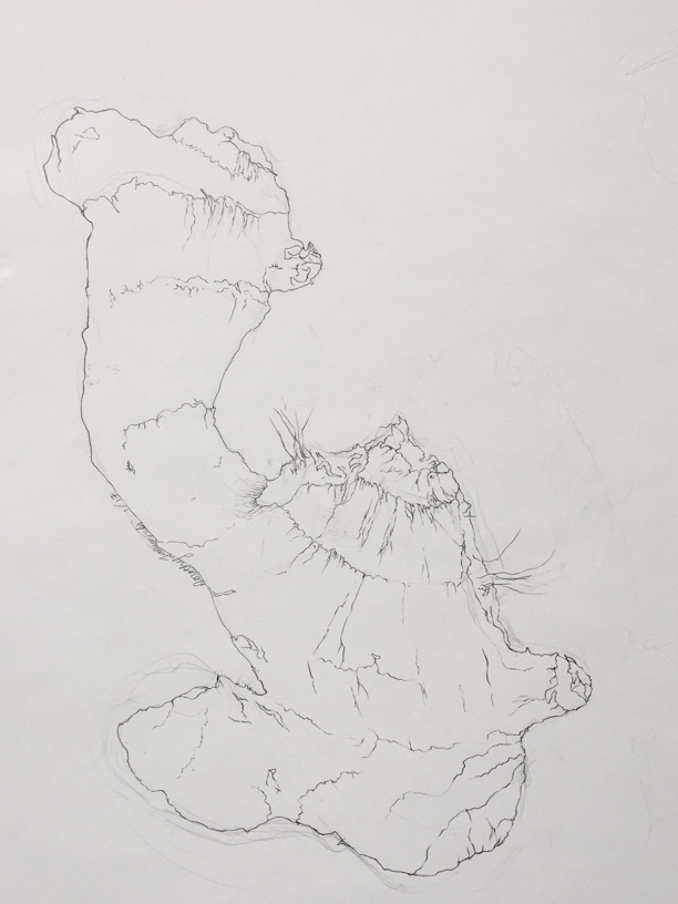 Contour Line Drawing of Ginger