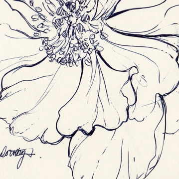 Blue ink sketch of flower