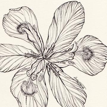 Ink flower 04