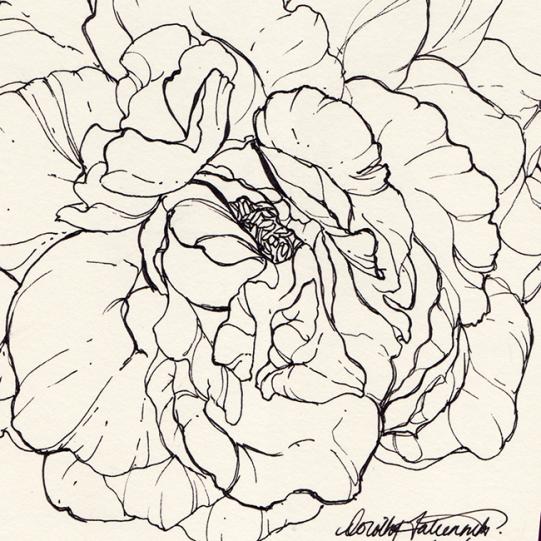 Ink illustration of a rose