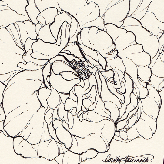 Ink illustration of a rose